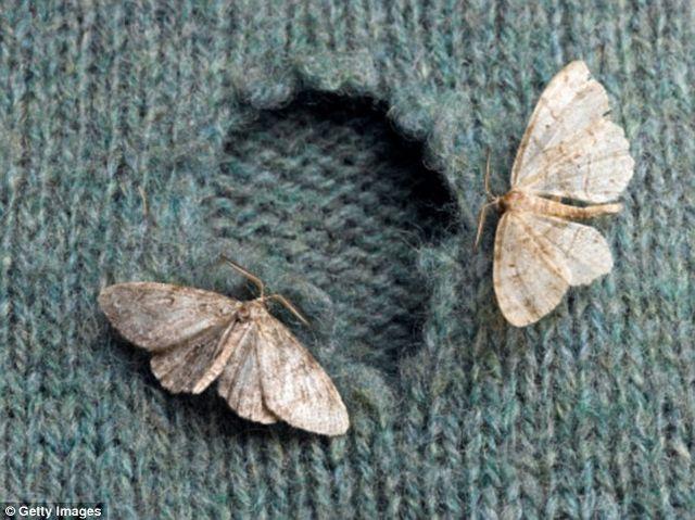 Как избавиться от насекомых дома и на даче? Уничтожение вредителей, насекомых и грызунов в Москве и Московской области