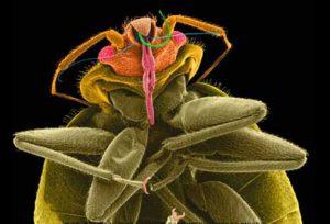 уничтожение клопов тараканов блох мух вшей, эффективно и с гарантией в Москве и Московской области