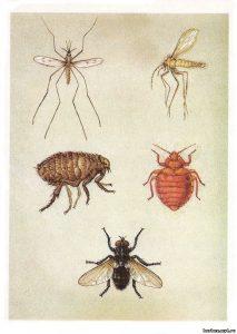 Кровососущие насекомые паразиты, уничтожение комаров Москва