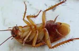 эффективное уничтожение тараканов в Москве и Московской области